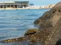Patella en puerto