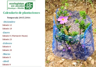 cartel plantaciones