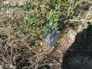plantación antigua (7)