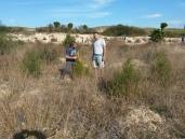 plantación antigua