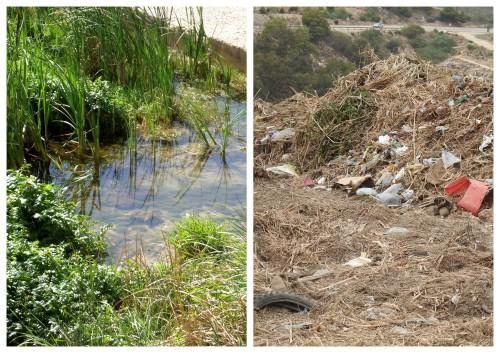 vegetación del río Oro