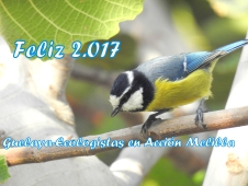 felicitacion-navidad-2