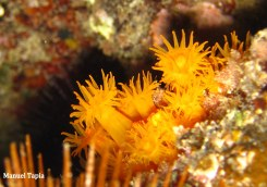 coral (2)