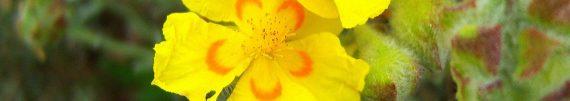 cropped-100_0579-001.jpg