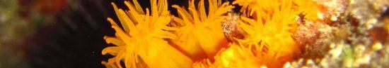 cropped-coral-2.jpg