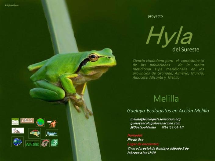 Cartel Hyla del Sureste en Melilla