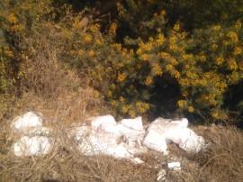 12-Cascos de escayola