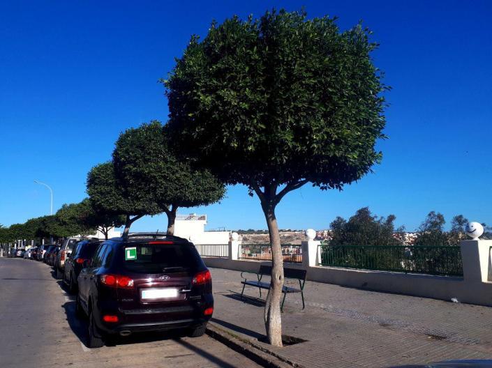 árboles podados sin edificios próximos
